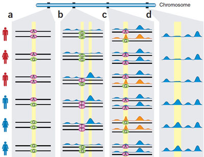 Inherited Variations In Noncoding >> Compbio Mit Edu Mit Computational Biology Group